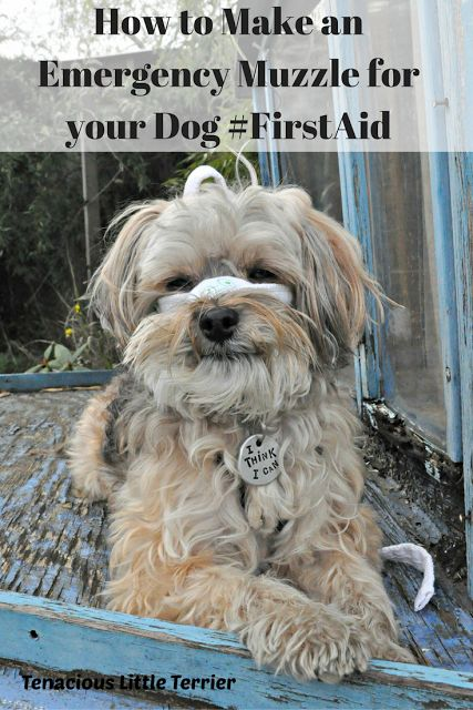 Making An Emergency Dog Muzzle and Putting It On #PetFirstAid ~ Tenacious Little Terrier