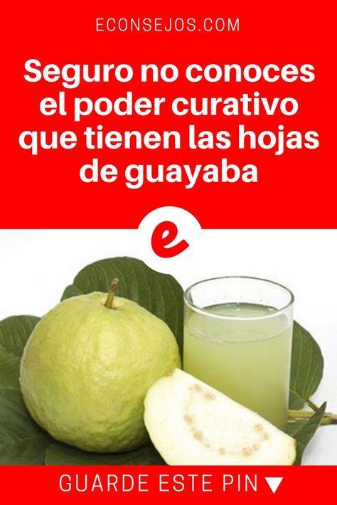 Hojas de guayaba beneficios | Seguro no conoces el poder curativo que tienen las hojas de guayaba | La guayaba no es sólo una fruta deliciosa, sino también una fuente de posibilidades para nuestra belleza y salud