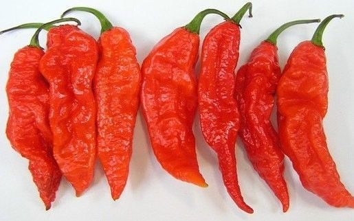 Organic Heirloom 30 Ghost Chili Chilli Seeds Chile Pepper Seeds Bhut Jolokia F47