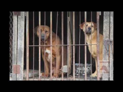 Minister Lee Dong-Phil: Support and Pass the new Animal Protection Law in South Korea! sign petition