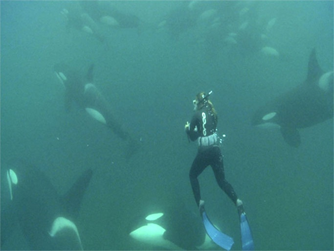 The woman who swims with Orca Whales... Say whaaaat? This is going to be me someday ;)