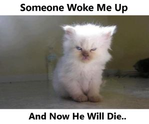 The most pissed off cat you have ever seen!