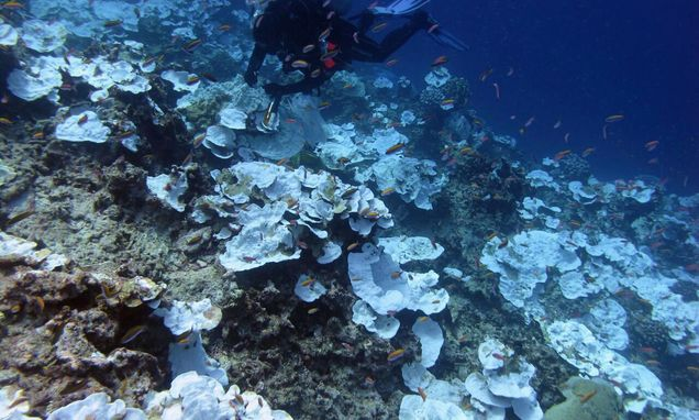 Scientists battle to save world's coral reefs This week, more than 2,000 coral reef scientists meet in Hawaii for the International Coral Reef Symposium #ICRS2016. They'll be talking about the major threats to coral reefs - overfishing, pollution, and climate change - and what can be done to save them.