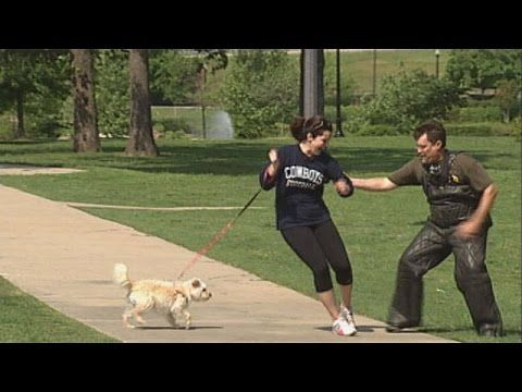 Best ultimate pit bull protection guard dog attack trained family pitbull k9 Achilles - YouTube