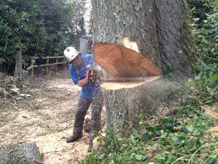 Tree surgery is the process of treatment or repair of the trees which are damaged. This surgery is usually required to treat the damaged trees which may either lead to problems for the people living in the surroundings or in another case, are in danger of decaying or dying.