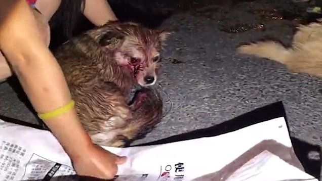 PETA Asia has released a shocking video that shows injured and dead dogs left on the road by the Chinese Government