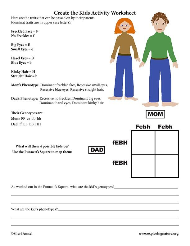Learn About Genetics And The Human Genome On Exploringnature Org Genetics Activities Genetics Lesson Worksheets For Kids Dominant and recessive traits worksheet