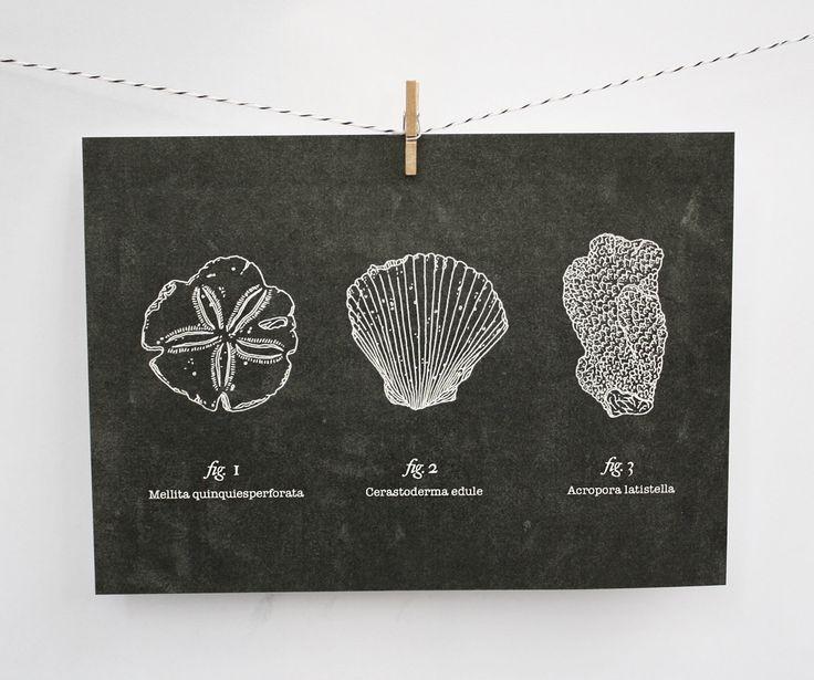 from Satchel & Sage: Art Inspiration, Paper Prints, Series Prints, F Artsi, Art Design, Beachcomb 5X7, Artifact Series, Beaches Comber, 5X7 Prints
