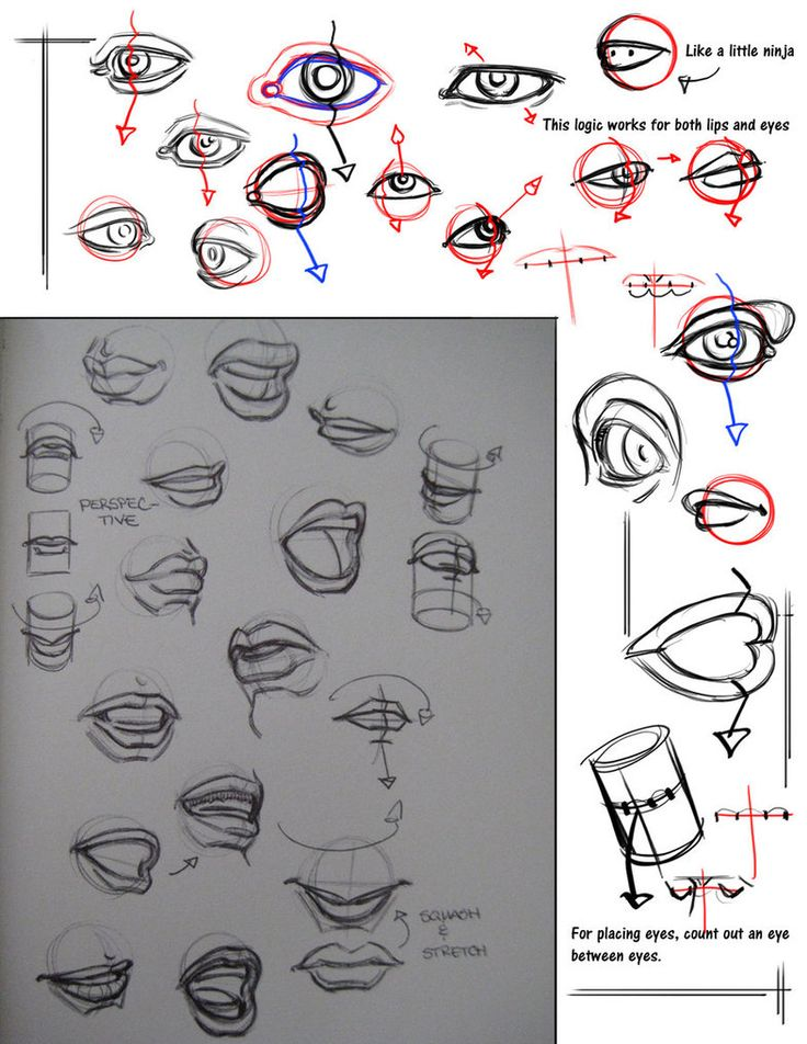 Simple Character Design Tutorial : Best images about character anatomy mouth on