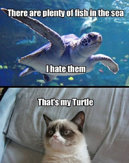 Grumpy Cat Turtle photo