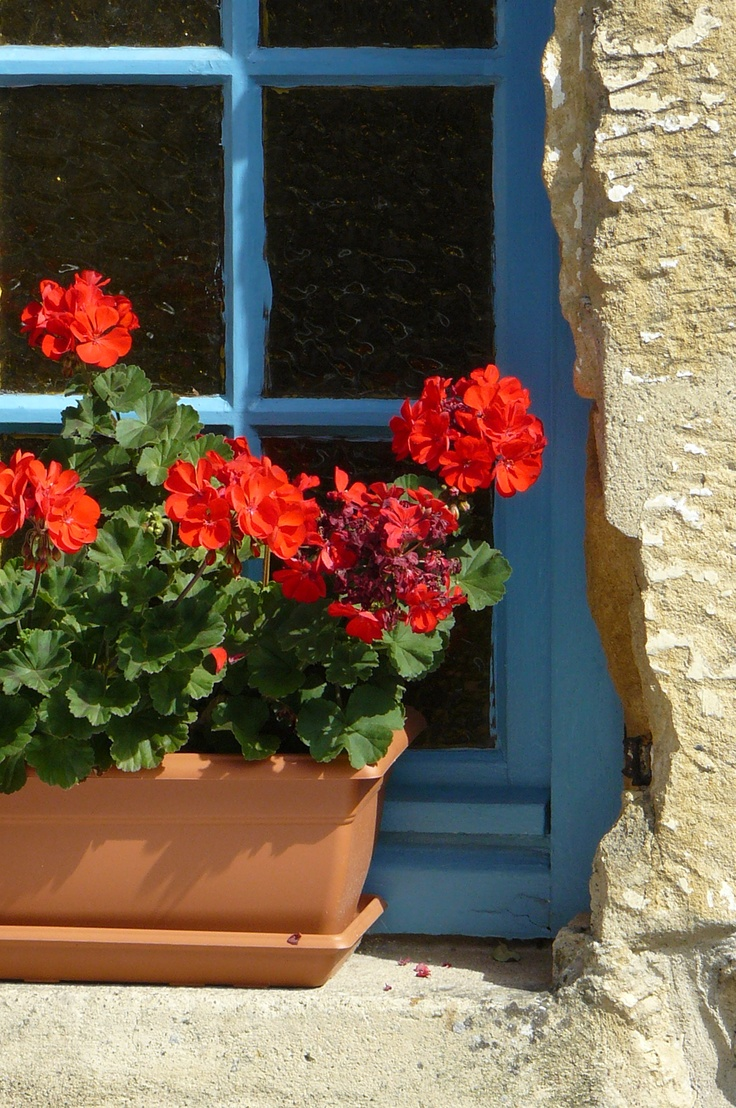 Window In Monpazier France Window Box Flowers Red Geraniums Geraniums