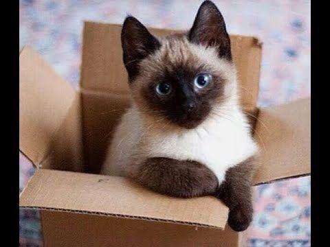 Cómo decirle a tu gato que lo quieres. - YouTube