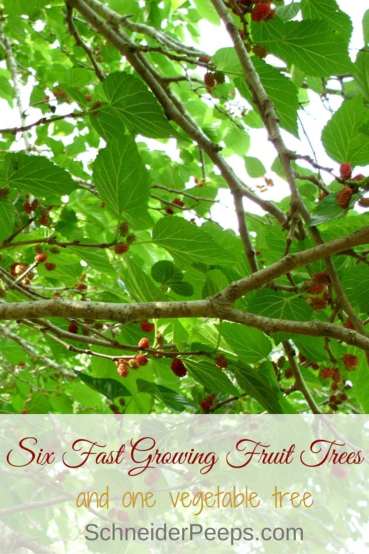 best 25 fast growing fruit trees ideas on pinterest fruit tree