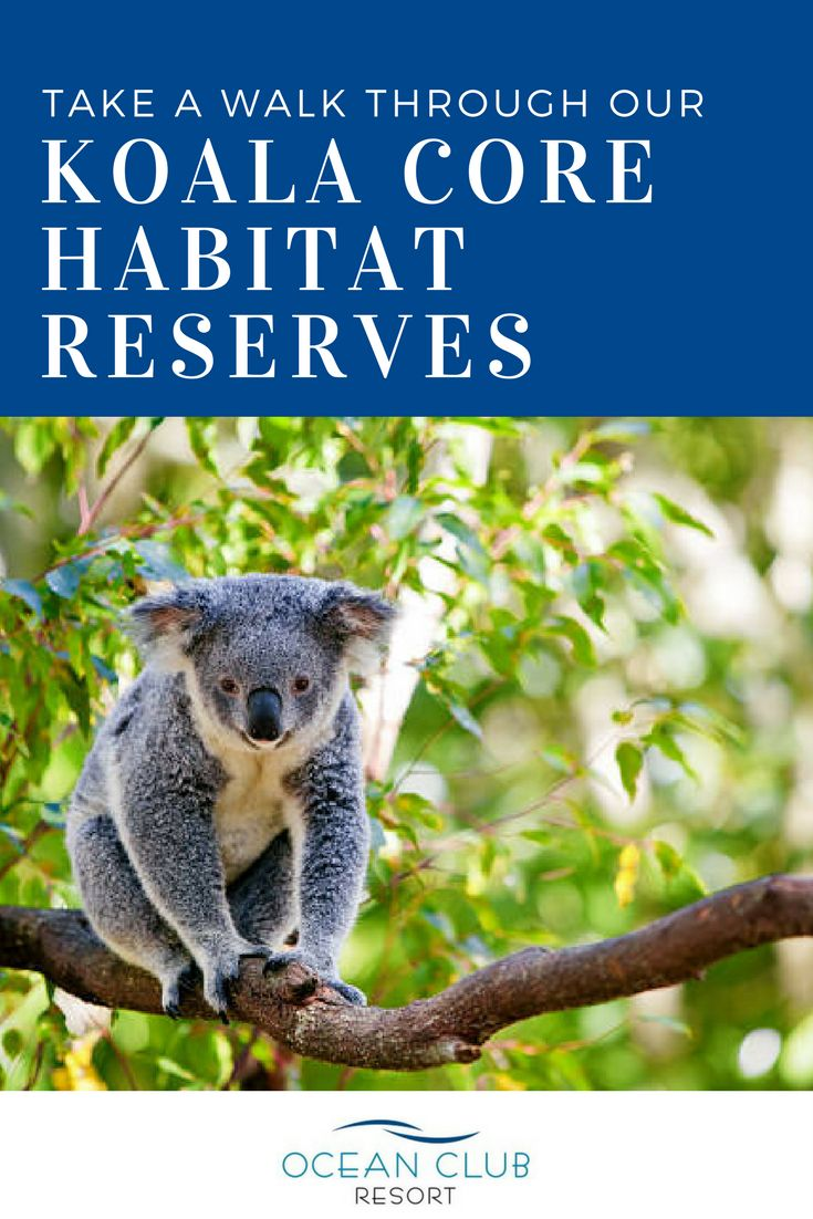 At Ocean Club Resort, we have our very own walking tracks and dedicated koala core habitat reserves. Relax and unwind by strolling through at your leisure and enjoy taking in your surrounds as you reconnect with nature.   Call Karen today on 1800 462 326 if you want to experience the best in over 50's living!   #atOCR #OceanClubNSW #OceanClubResort #PortMacquarie #Retirement #RetiredLiving #MidNorthCoast #Australia #LuxuryRetirement #AffordableRetirement #Over50
