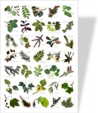 #Poster nature feuilles #leguide