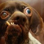 Cei mai urâți 8 câini din lume