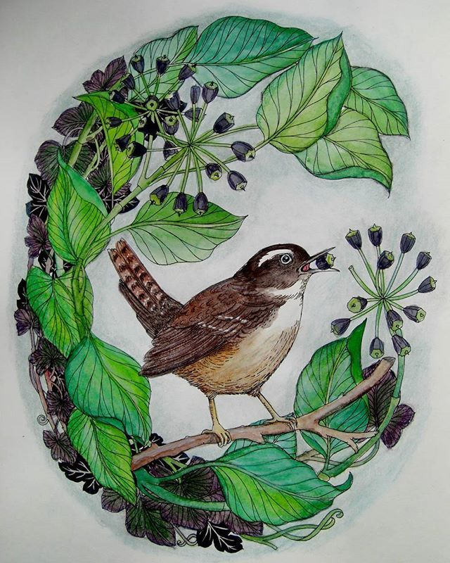 Wren With Ivy Fruit From The Flower Year By Leila Duly Used Lyra