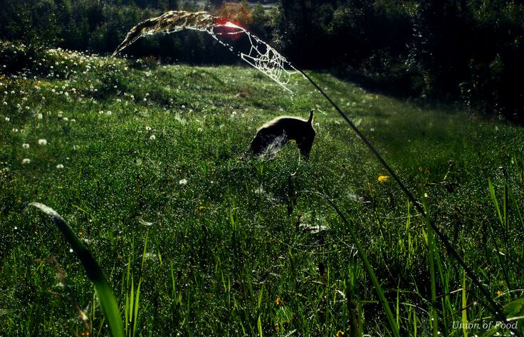 Nature. Pedro glistened in the sun. Dog and morning dew.