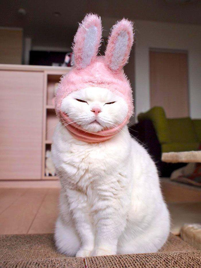 gato-anciano-disfrazado-ura-japon (6)