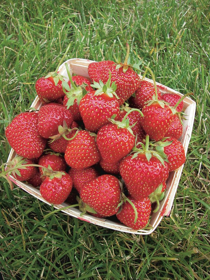 We have a sale going on right now on #strawberry plants! Get a bundle of 25 strawberry plants for just $25! Sale ends soon so do not wait!
