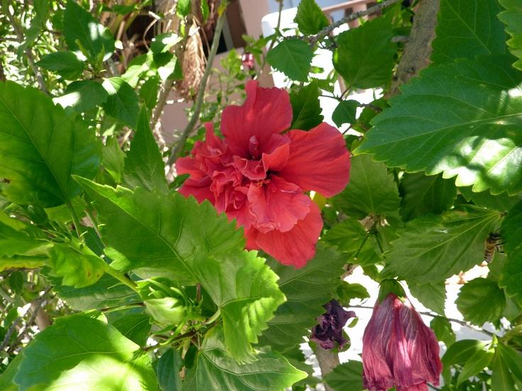 Prachtige bloem foto gemaakt op Karpathos