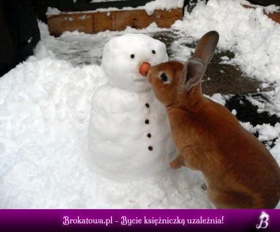 Bałwanek i królik