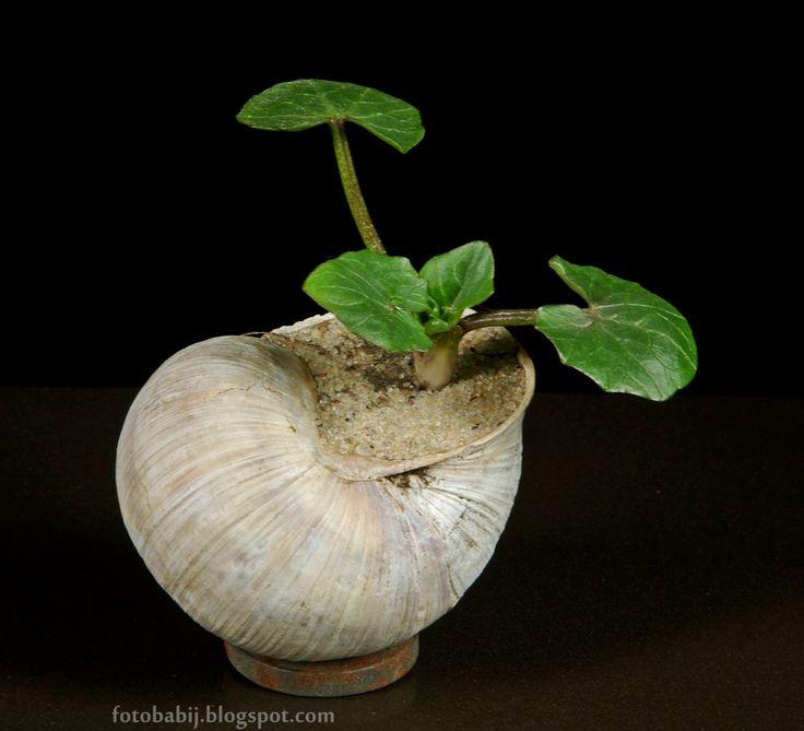 Darmowe zdjęcia na tapety, e-kartki, życzenia... Free Photos : Roślinka w muszelce, oryginalna doniczka