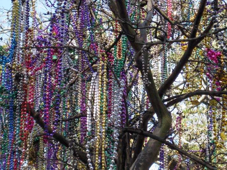 The best reason to live on a Mardi Gras parade route? You get a Mardi Gras tree after the parade passes