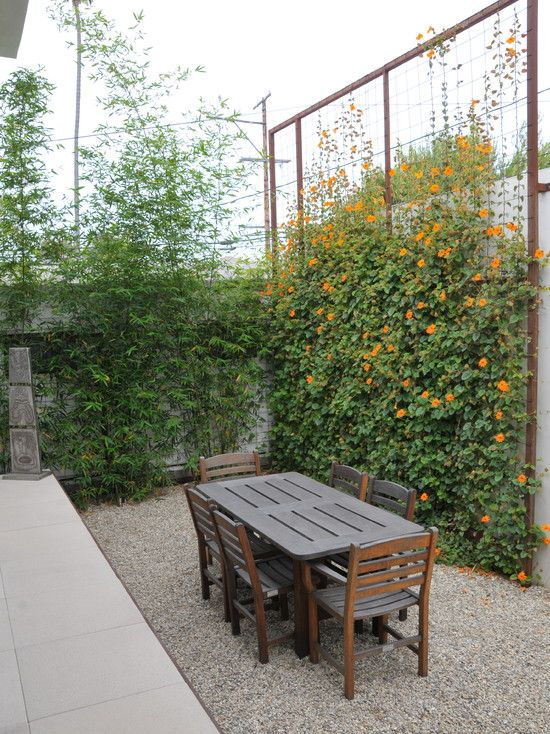 Tall Screen With Custom Metal Trellis, With Orange Clock Vine. Eclectic  Landscape By SB Garden Design