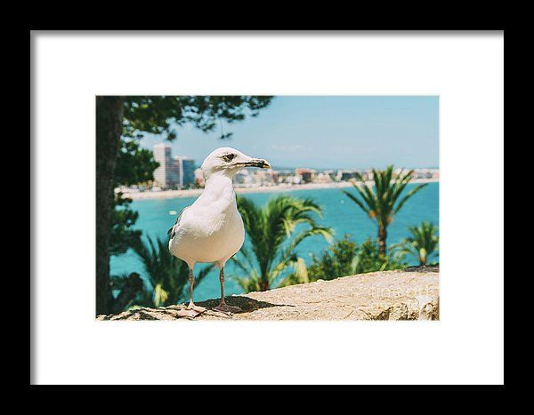 Funny White Seagull Bird Portrait Framed Print