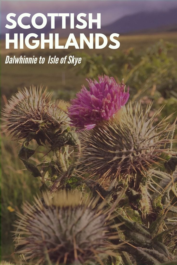 So you're planning your Scottish Highlands adventure. Heres some great tips & a few photos to help you plan the trip of your dreams to the Scottish Highlands. #ScottishHighlands #VisitScotland #ScottishRoadTrip