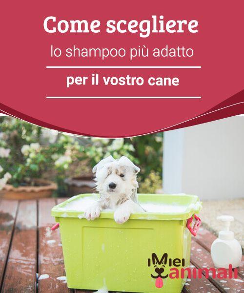 Come scegliere lo shampoo più adatto per il vostro cane Per fare il bagno al #cane occorre scegliere un #prodotto adatto al suo tipo di #pelo e di #pelle. In questo modo non solo eviterete fastidiose #irritazioni, ma potrete #spazzolarlo con più facilità. #BELLEZZA E MODA