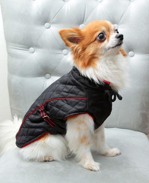 Tofik w kurtce pikowanej. Więcej zdjęć na www.petathome.pl