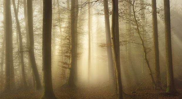 Into the Trees - Fototapeten & Tapeten - Photowall
