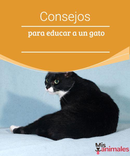Consejos para educar a un gato -Mejor con Mascotas  Los gatos son animales solitarios e independientes, por eso, adaptarse a reglas les resulta díficil. Aquí te damos algunos consejos para educar a un gato.
