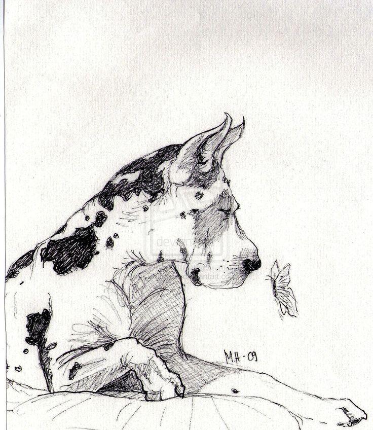 Harlequin Great Dane