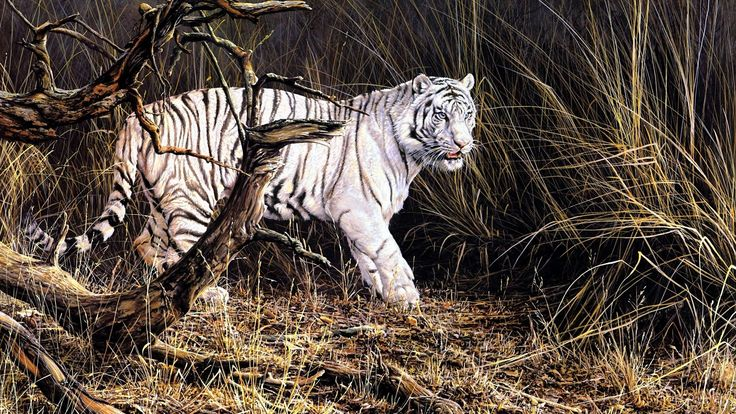 white tiger in forest - http://1080wallpaper.net/white-tiger-in-forest.html