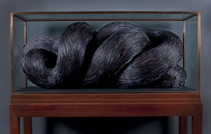 fine', 2012 - kate mccgwire mixed media with crow feathers in antique cabinet