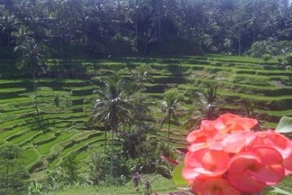Charm of Bali is second to none, almost every tour you want is in this paradise island. For most people visiting Bali is a dream, on the island of Bali