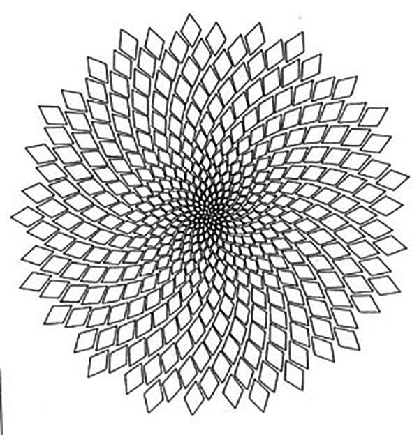 22 best Fibonacci & phyllotaxis spirals images on