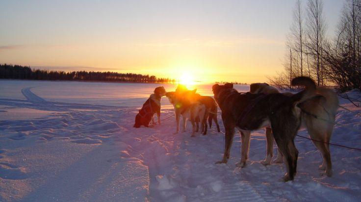 Bearhill's Overnight Tour - husky safari -Rovaniemi, Lapland, Finland