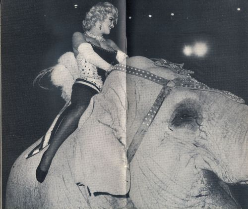 1000 images about marilyn circus charity gala march 1955 on pinterest arthritis and for The gardens at monroe