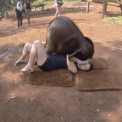 GIF Well, play with me #animals #baby elephant #girl