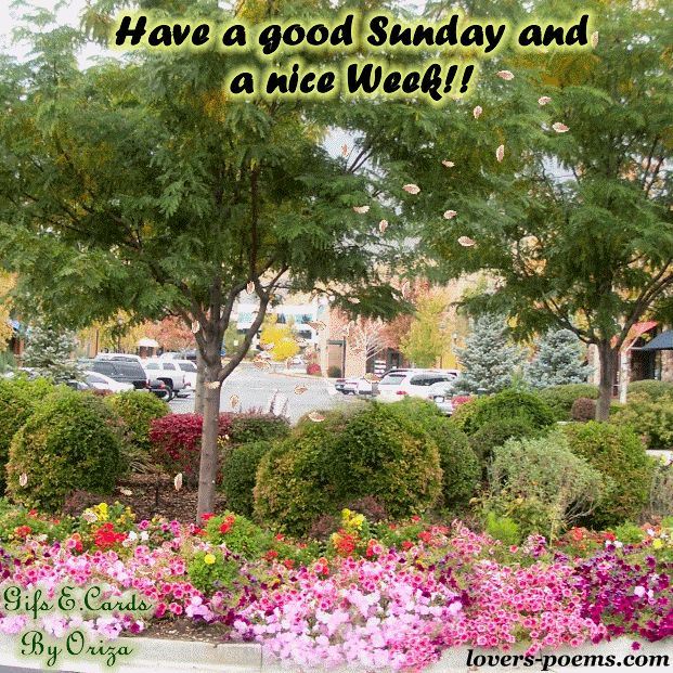 happy sunday images facebook - Google Search