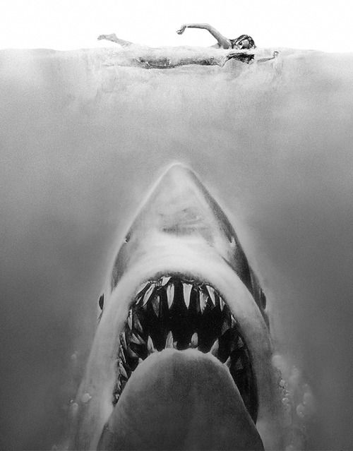 Jaws Book Cover Art : Like the black white jaws pinterest posts o