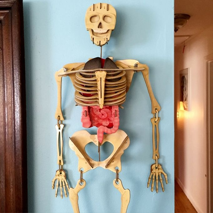 top 25+ best human skeleton for kids ideas on pinterest | human, Skeleton