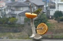 「鳥の餌箱」の画像検索結果