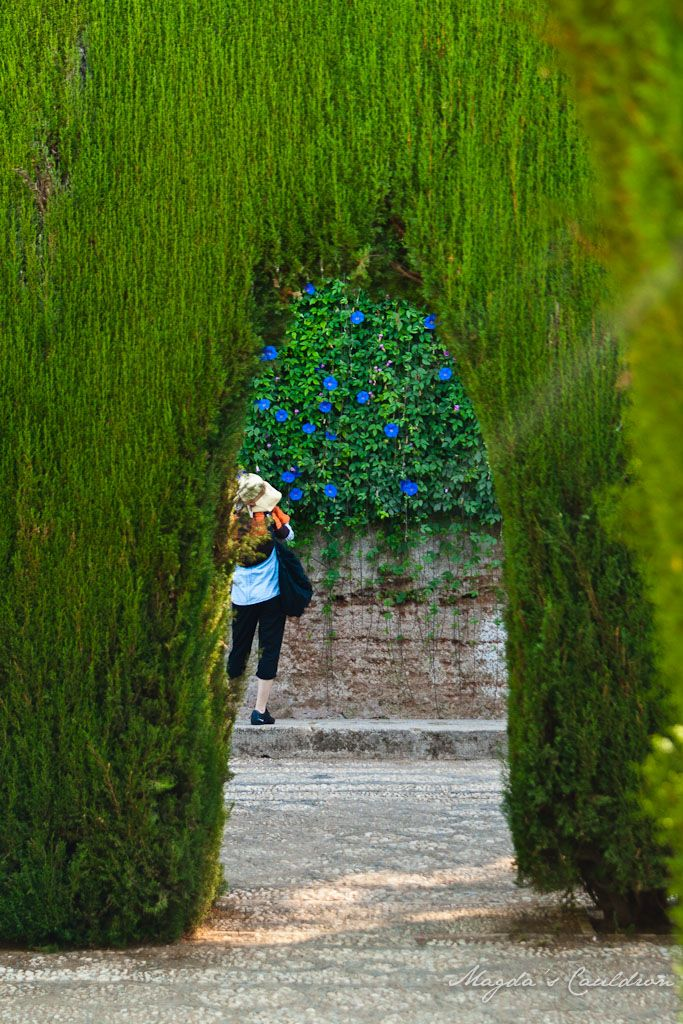 Alhabra, Granada, Spain - the garden