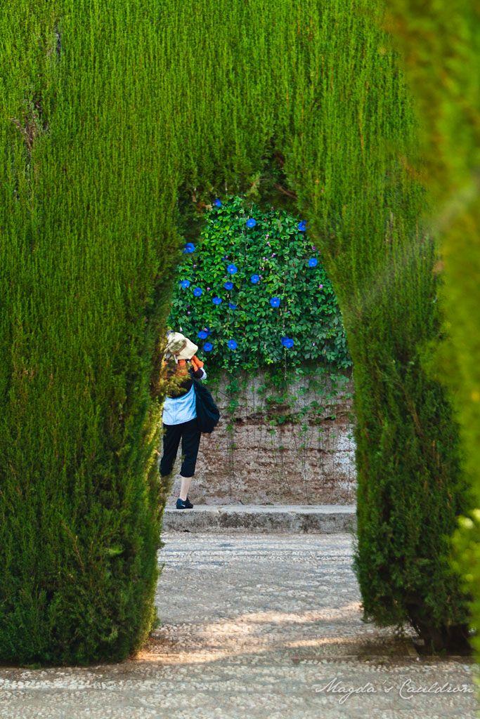 Alhabra, Granada, Spain - the garden