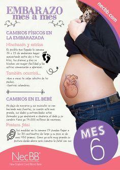 """infografía para pinterest NecBB """"El embarazo mes a mes"""" (Mes 6)"""